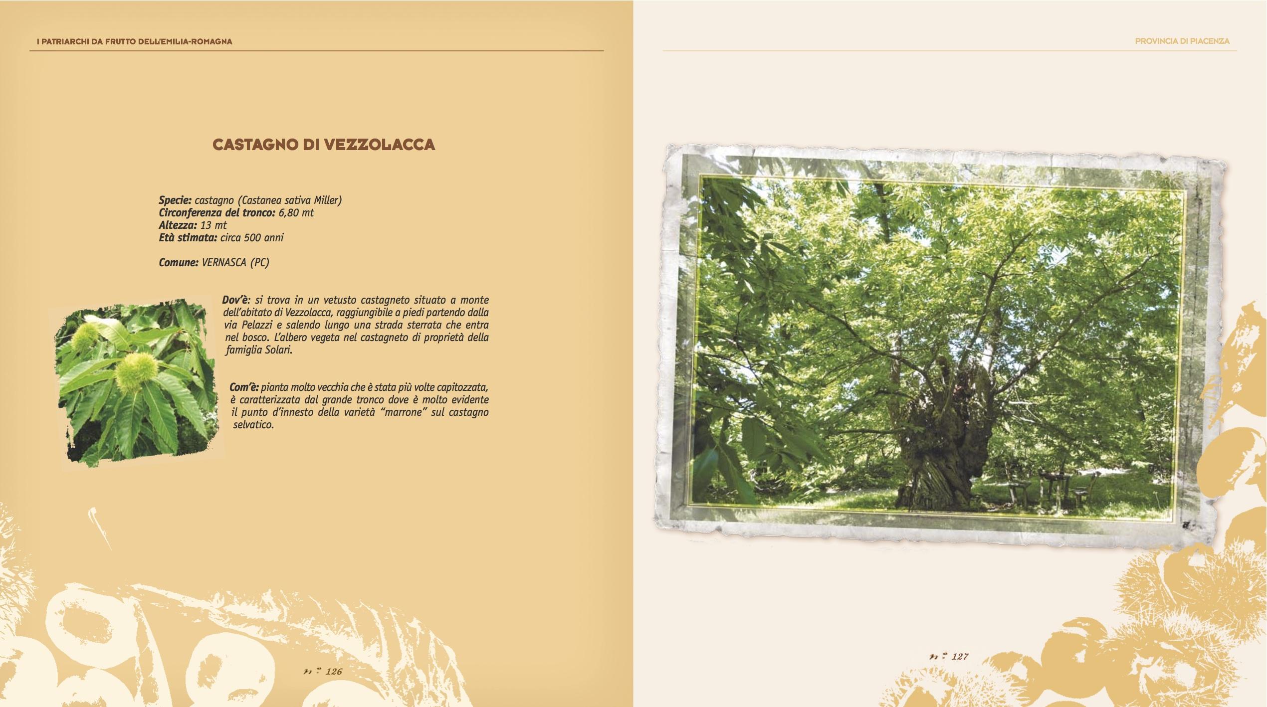 Foto Di Alberi Da Frutto alberi da frutto – vezzolacca.it